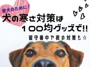 愛犬のために!犬の寒さ対策は100均グッズで手作り!!留守番中や夜の対策も