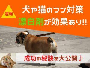 【保存版】犬や猫のフン対策は漂白剤が効果あり!!成功の秘訣を大公開