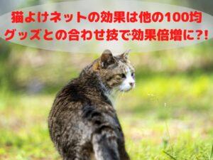 必見!猫よけネットの効果は他の100均グッズとの合わせ技で倍増に!